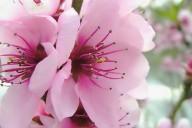 Spring__6